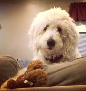 Murray and His Bear